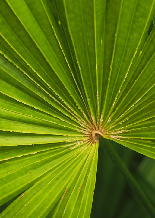 Radiating Frond