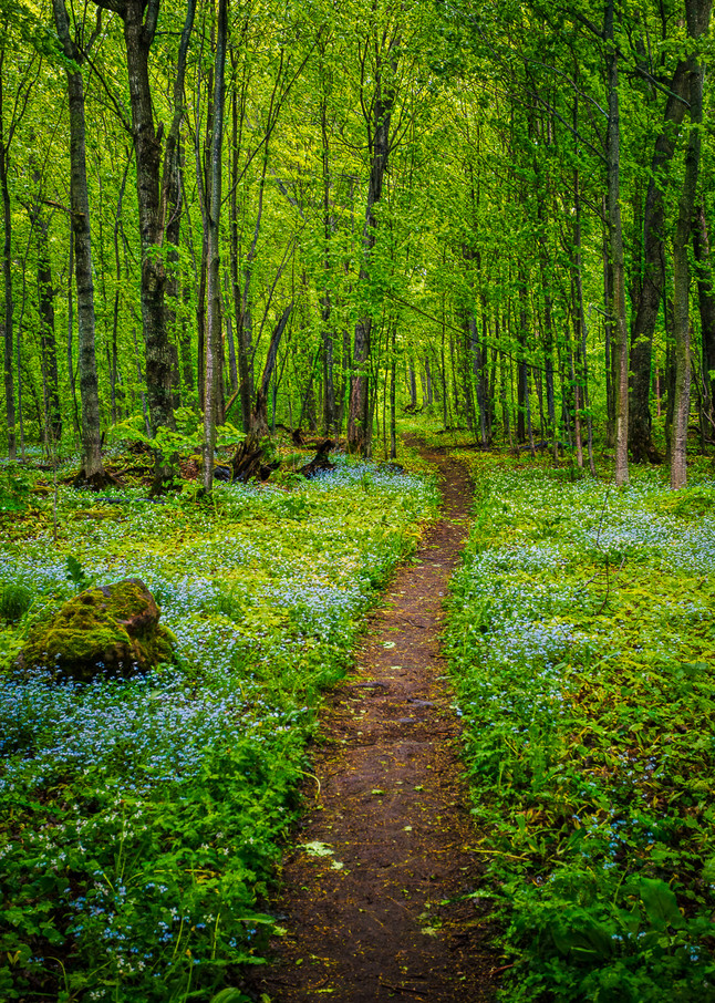 Forest Floor V  Photography Art   Whispering Impressions