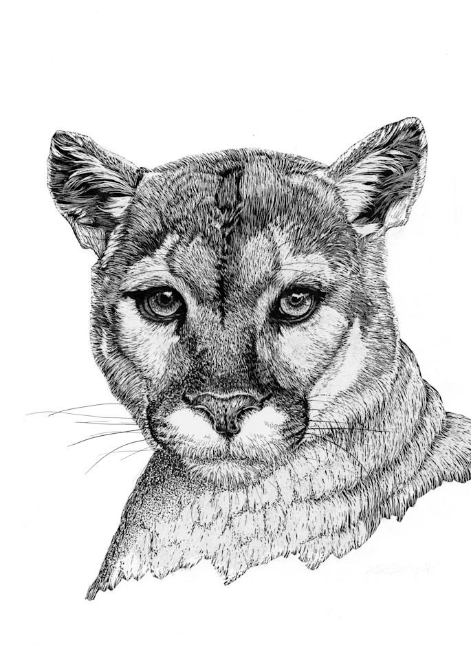 """Keeping Watch""   Mountain Lion Art   Drawn To Nature"