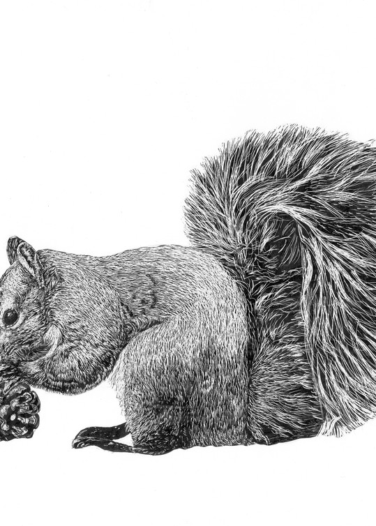 """""""Pine Nut""""   Gray Squirrel Art 
