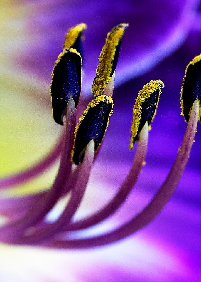 Purple Lily Stamens Close Up Photography Art | Hatch Photo Artistry LLC