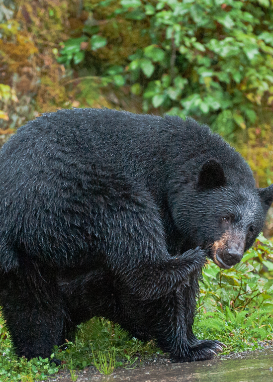 Black Bear Mom Photography Art | Hatch Photo Artistry LLC