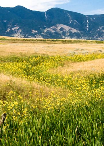 Wyoming Wildflowers Photography Art | Hatch Photo Artistry LLC