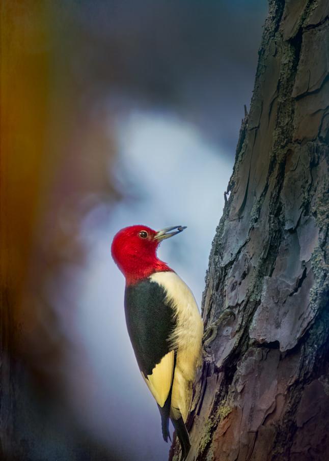 Beautiful Redhead Photography Art | Thomas Yackley Fine Art Photography