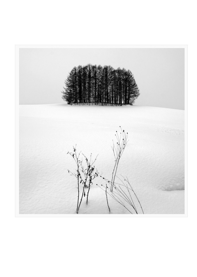 Tree Copse Study1 Art | Roy Fraser Photographer