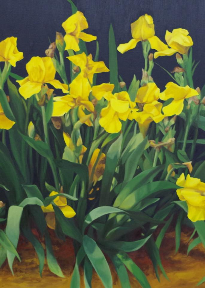 Yellow Iris Art   Helen Vaughn Fine Art
