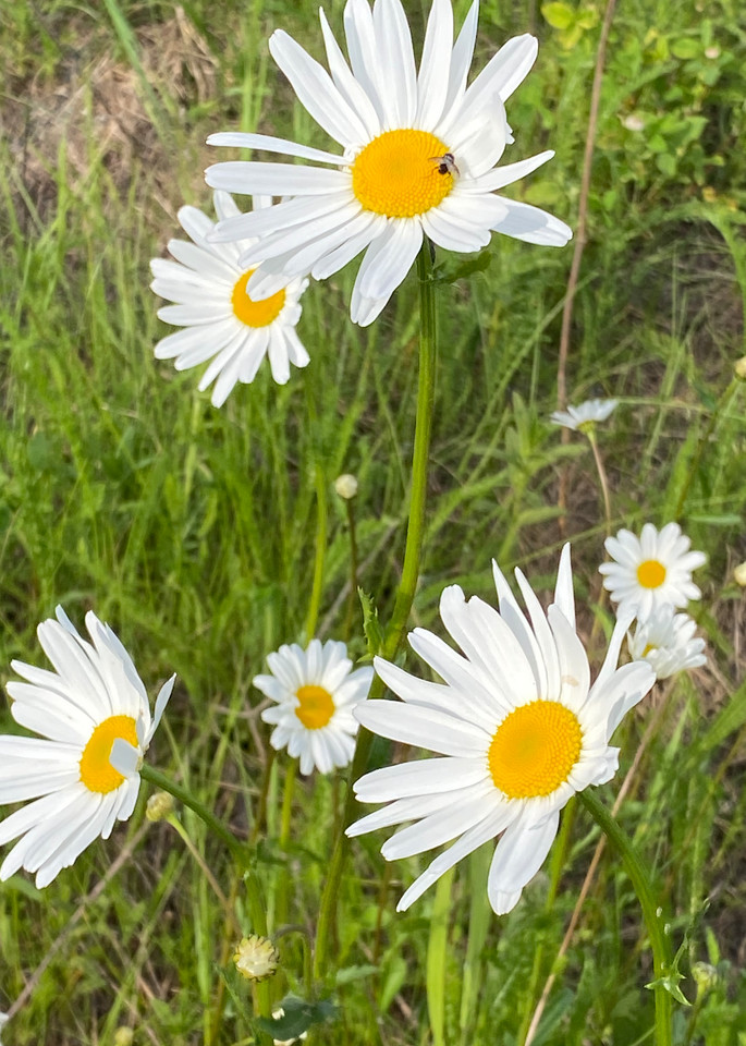Stop And Smell The Flowers Photography Art | Visionary Adventures, LLC
