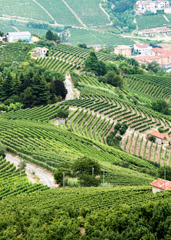 Northern Italian Vineyards Panoramic Photography Art | Hatch Photo Artistry LLC