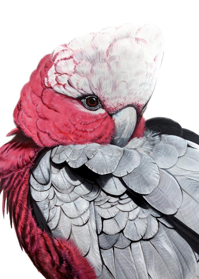 Glenda - Galah Cockatoo