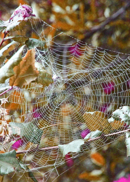 Spider Webs nature intricate-constructions