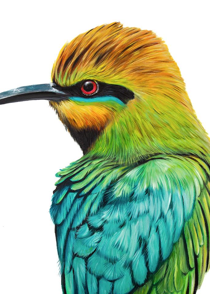 Stan - Rainbow Bee-eater