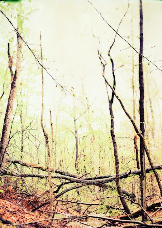 Nature Color 05 Photography Art | Dan Chung Fine Art