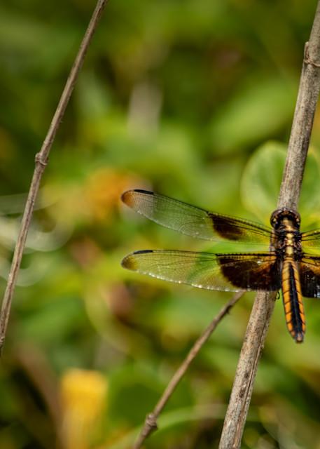 Dragonflies  6620  Art | Koral Martin Fine Art Photography
