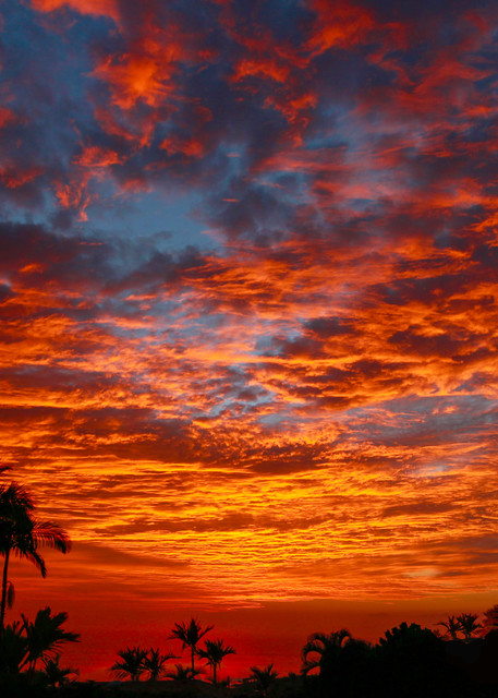 Kona Fire Sky Photography Art | Bird In Paradise