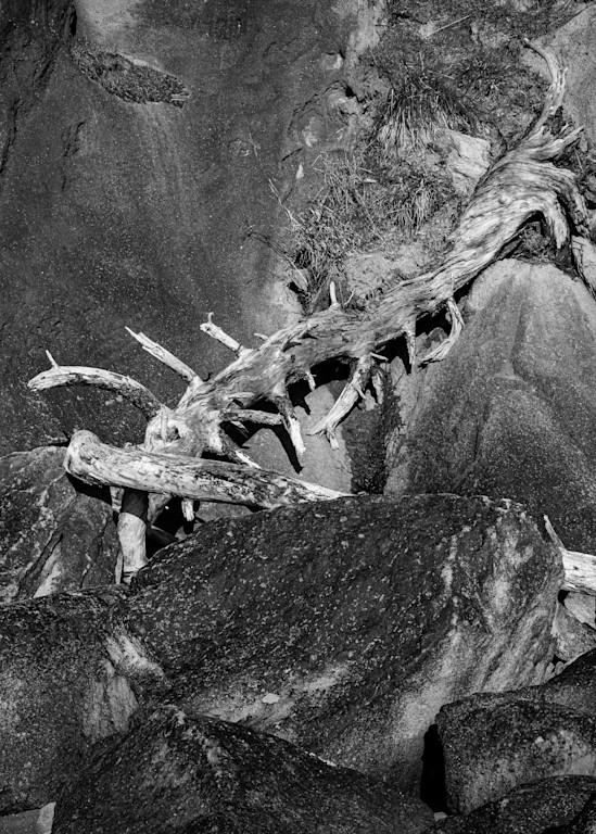 Driftwood, Rockaway Beach, Oregon, 2020