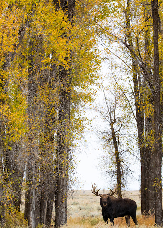 Gros Ventre Giant Photography Art | Brokk Mowrey Photography