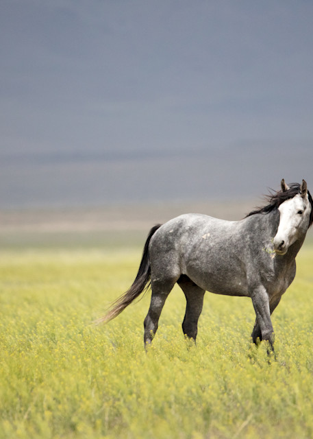 Stallion In The Wind Photography Art | Brokk Mowrey Photography