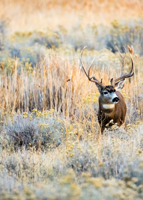 Brush Buck Photography Art | Brokk Mowrey Photography