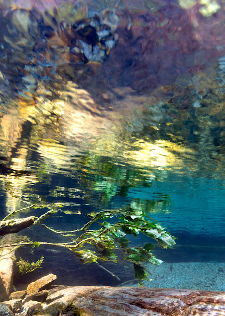 Underwater Monet # 0988 Photography Art | Mary Edwards Photography