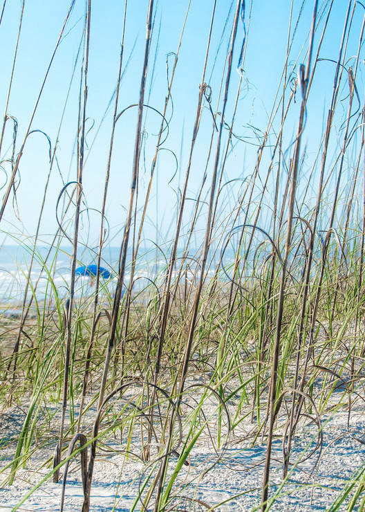 Blue Beach Umbrellas Through The Grass