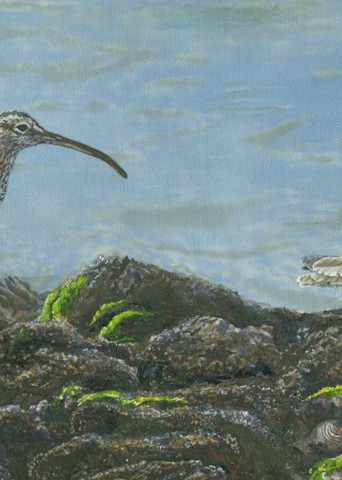 """Crab Cakes""   Whimbrels Art 