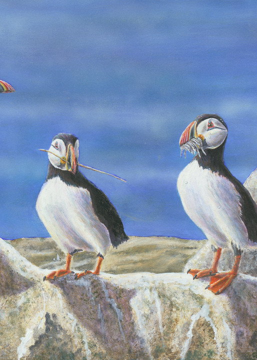 """""""The Suitors""""   Atlantic Puffins Art 