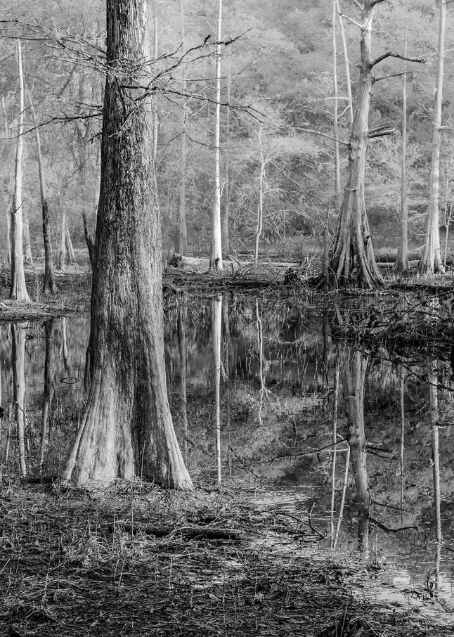 Reflections By Dan McCarthy