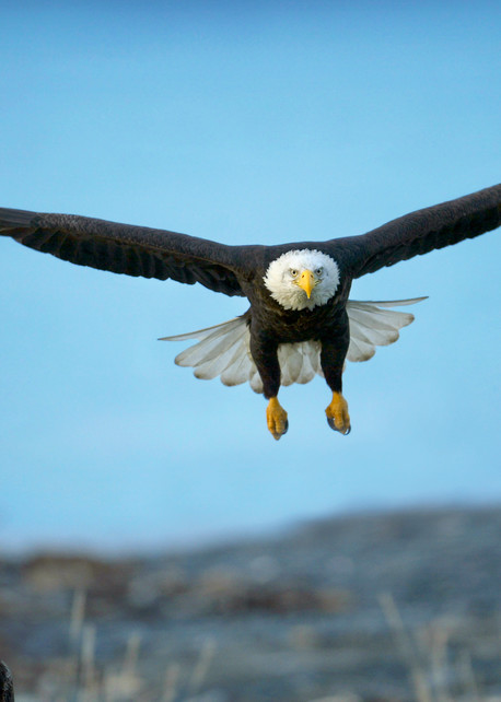 Eagle Flight School Photography Art | Nature's Art Productions