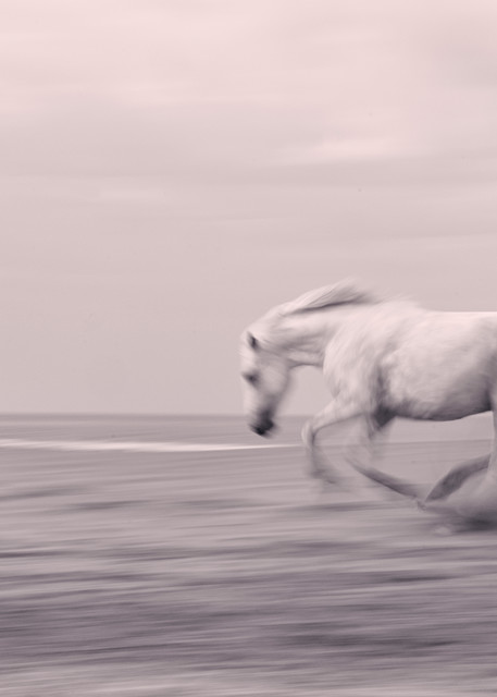 Beach Gallop