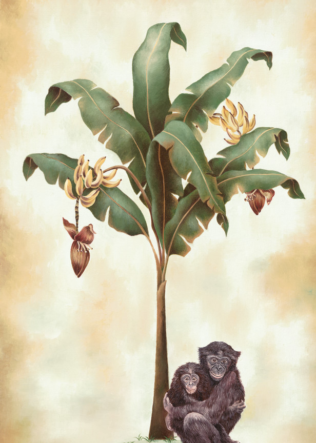 Monkeys And Bananas   Prints Art | Mercedes Fine Art