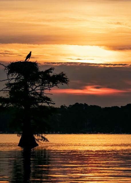 Sunrise At Reelfoot Lake With Osprey  9177  Art | Koral Martin Fine Art Photography
