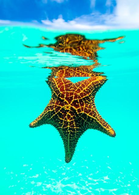 Mermaids Pet Photography Art | Art Sea Love