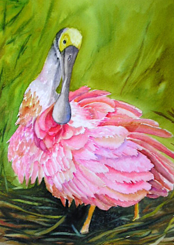 Spoonbill Grooming, From an Original Watercolor Painting