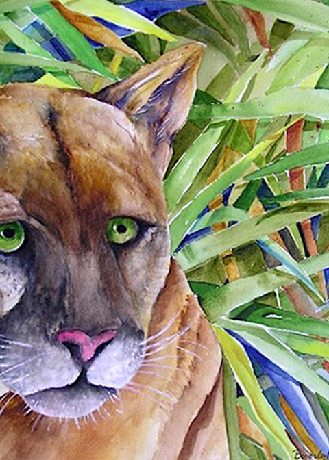 Florida Panther, From an Orignal Watercolor Painting
