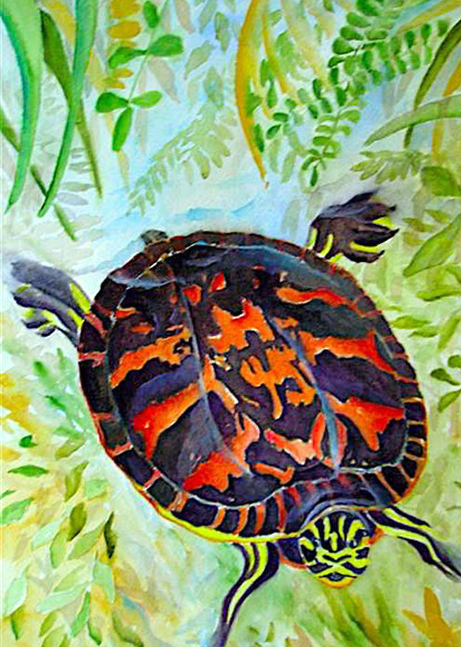 Painted Turtle, From an Original Watercolor Painting