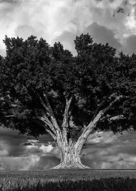 Majestic Splender Photography Art | cosimo scianna