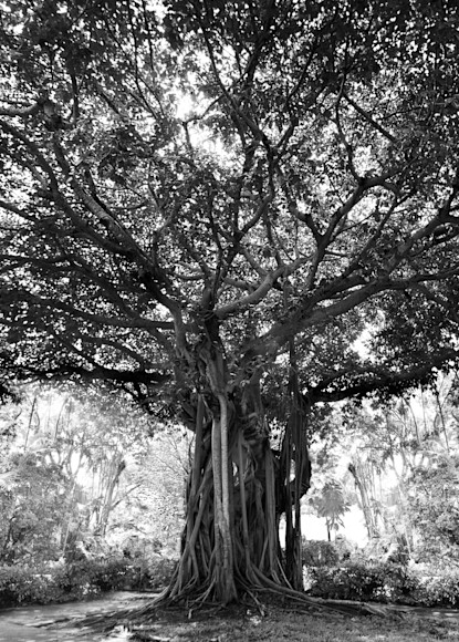 Standing Watch Photography Art   cosimo scianna