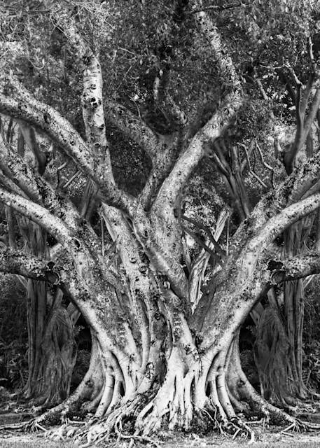 Double Time Photography Art   cosimo scianna