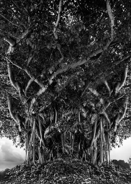 Defiant Presence Photography Art   cosimo scianna