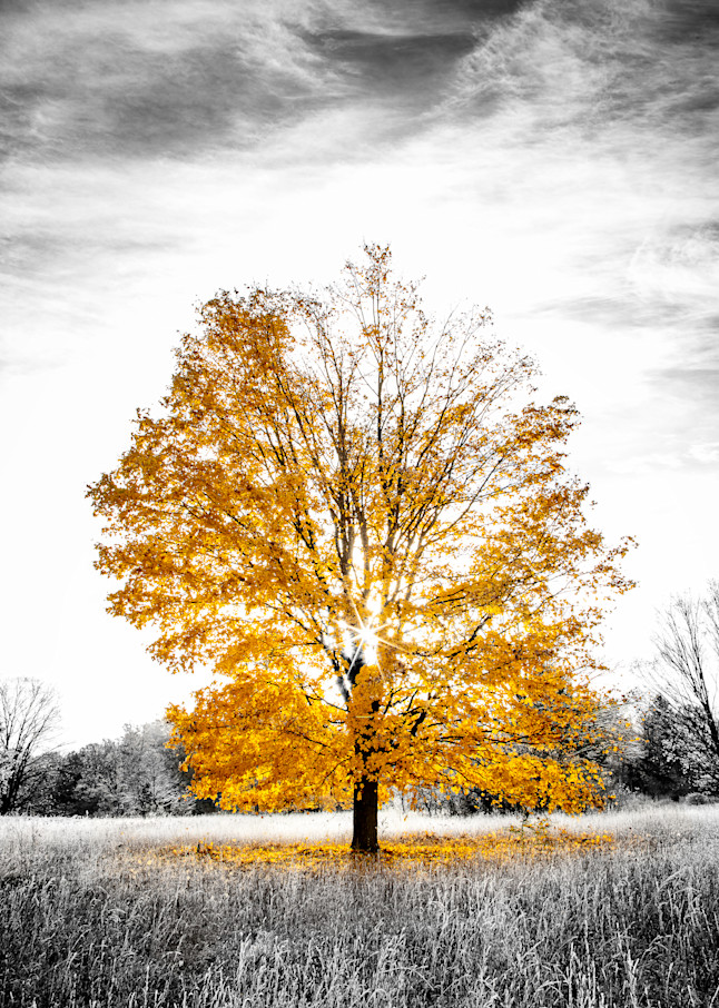 Last Call For Fall Photography Art | Drew Smith Photography, LLC