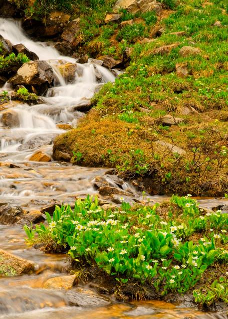 Genesis of a Stream - A Fine Art Photograph by Marcos R. Quintana