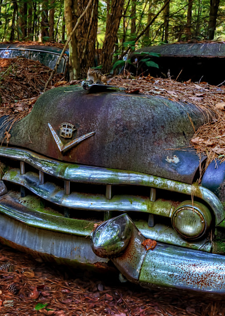 Dual Hood Ornament Photography Art | Ken Smith Gallery