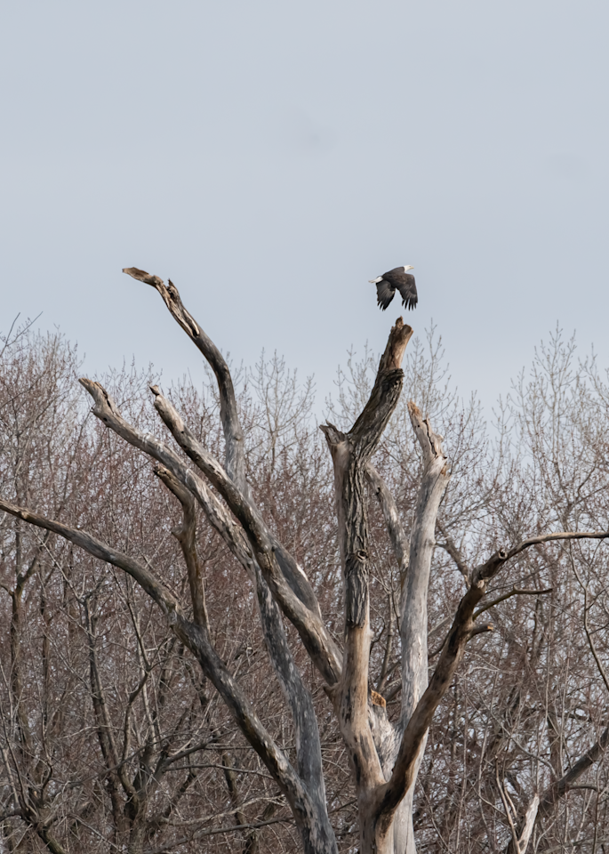The Perching Tree Photography Art   Happy Hogtor Photography