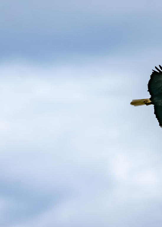 Flying Through Blue Skies Photography Art | Happy Hogtor Photography