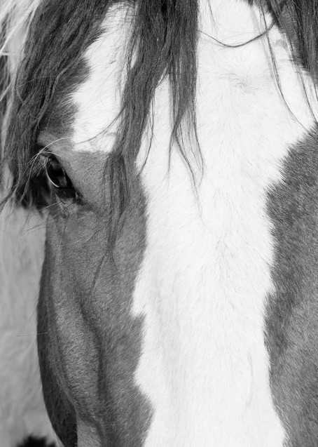Attentive Photography Art | Deb Little Photography