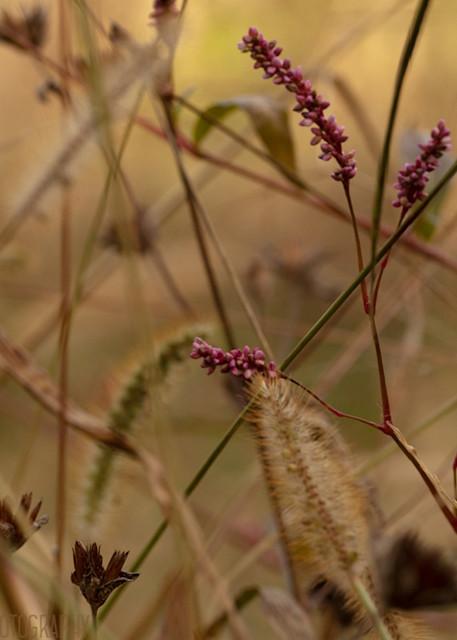 Grasses 0755  Photography Art | Koral Martin Healthcare Art