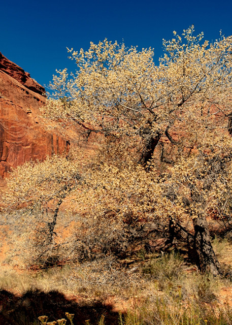 Tree Golden Cathedral Neon Canyon 2637  Photography Art | Koral Martin Healthcare Art