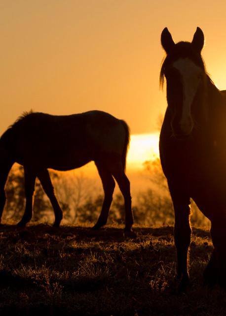 Yarrow At Sunrise Photography Art | Deb Little Photography