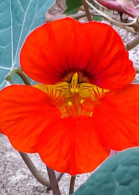 Orange Flower Photography Art | David Louis Klein