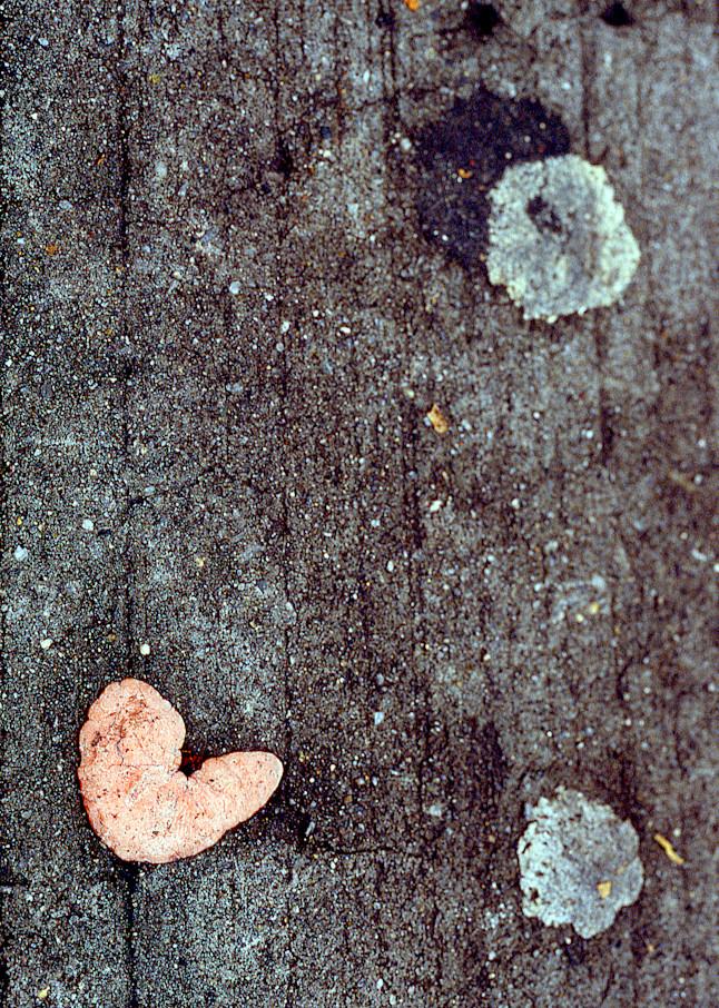 Gum Heart Abstract Brooklyn Sidewalk Print – Sherry Mills